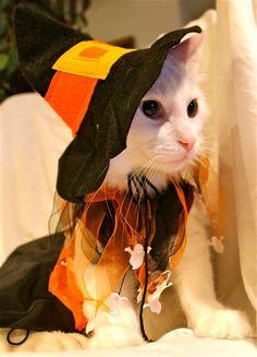 ♥ Halloween Cat