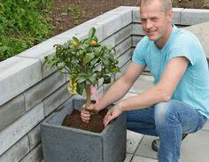 Store plantekrukker kan være ganske dyre. Derfor er det mye å spare hvis du lager dem selv. I tillegg kan du få dem som du vil.