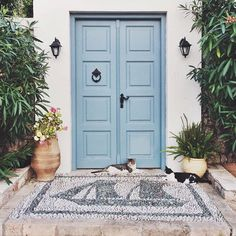 Cats of Spetses Cats, Furniture, Instagram, Home Decor, Gatos, Decoration Home, Room Decor, Home Furnishings, Cat