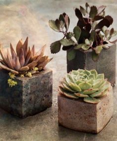 Cement planters made in milk cartons