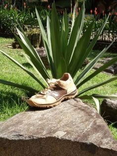 A fabric and leather alternative made of the Fique plant - MaterialDistrict Alternative, Plants, Hunting, Fabric, Leather, Tejido, Tela, Cloths, Plant