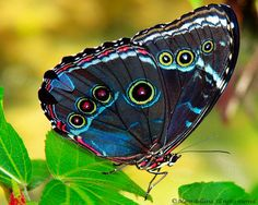 Colorful Butterfly | Flickr - Photo Sharing!