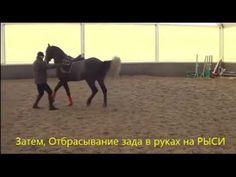 Конный спорт. Обучение. Семинар Михаил Кизимов. Часть №2