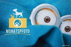 Hundefotografie unter Hundebloggern: das Monatspfoto