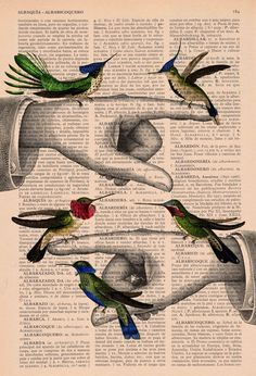 Upcycled Book Print Hummingbirds Print on Vintage book page