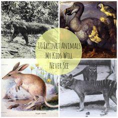 extinct-animals