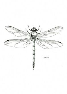 tattoo designs 2019 10 scribbly insects on postcards tattoo designs 2019 Libelle – Dragonfly pendrawing by Maartje van den Noort tattoo designs 2019 Dragonfly Drawing, Dragonfly Images, Dragonfly Tattoo Design, Dragonfly Art, Tattoo Designs, Art Designs, Dragonfly Illustration, Tattoo Drawings, Body Art Tattoos