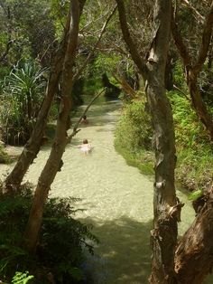 Eli Creek, Fraser Island, Queensland, Australia. Eli Creek spills 80 million litres of purest fresh water per day into the sea!