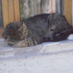 Il #weekend secondo #Bigio ♡   Chissà se la ciotola è comoda ;-)  https://www.instagram.com/p/BH7CuwrDBNt/   #cats  #cutecats #sweetcats #lovelovelove #lovecat  #cats #pets #animals #photooftheday #ilovemycat #nature #catoftheday #lovecats   #catsmylove #gatti #ioamoglianimali #MIAO :-)
