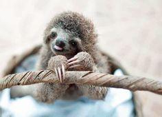 Attn Kristen Bell: Sloths Aplenty on #PBS & the New Photo Book '#Slothlove'