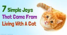 Living With a Cat http://healthypets.mercola.com/sites/healthypets/archive/2015/07/31/owning-cats.aspx?e_cid=20150731Z1_PetsNL_art_1&utm_source=petsnl&utm_medium=email&utm_content=art1&utm_campaign=20150731Z1&et_cid=DM80677&et_rid=1056078014 http://www.bestcatanddognutrition.com/ Roger Biduk