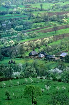 'Spring landscape.'    	Surrounded by flowering fruit trees and roofed by traditional wooden boards the houses of Sîrbi are tucked away in the idyllic Cosau valley Romania. (by Mick Palarczyk)