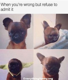Check out these Funny Animals Memes which are funny and cute at the same time. These animal memes are trending all over the internet. Funny Dog Memes, Funny Animal Memes, Cute Funny Animals, Cat Memes, Funny Shit, Funny Dogs, Cute Dogs, Fun Funny, Cat And Dog Memes