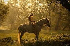 Backlight-glowing + horses...wow! In-stable, could catch light like this?