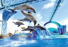 Blue Horizons Show at SeaWorld with dolphins and acrobatics! Best show!