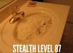 Hiding kitty! :)