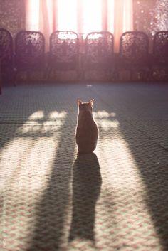 "gino-sayaski: ""Cat sitting near a window by Matteo Colombo - Stocksy United - Royalty-Free Stock Photos """