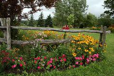 Using flowers around a split rail fence