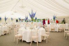 White marquee, blue delphiniums summer wedding