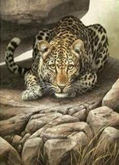 Wildlife Paintings, Wildlife Art, Animal Paintings, Animal Drawings, Drawing Animals, Beautiful Cats, Animals Beautiful, Animals And Pets, Cute Animals