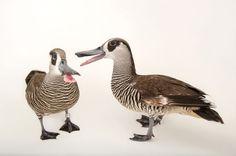 Lot ptaków: zdjęcie Arka Galeria - National Geographic Zwierzęta