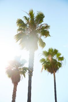 Palm trees and summer sun