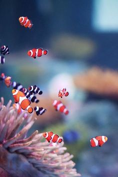 Sea Life Aquarium - Belezza,animales , salud animal y mas Tier Wallpaper, Ocean Wallpaper, Animal Wallpaper, Beautiful Sea Creatures, Animals Beautiful, Colorful Fish, Tropical Fish, Underwater Animals, Underwater Creatures