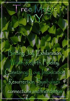 IVY Binding. Joy, Exhilaration, Wrath, Rebirth. Fidelity, Constancy, Love, Intoxication. Resurrection. Symbolises connections and friendships