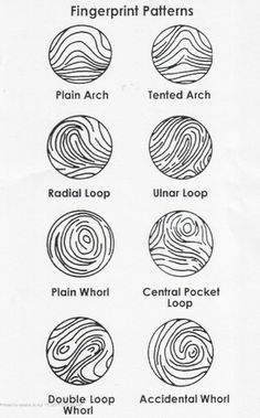 Fingerprint Pattern Facts | The different types of patterns in fingerprinting.