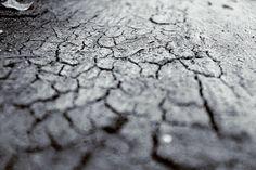 Diferentes tipos de suelo, necesidades y plantas adecuadas