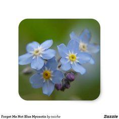 Forget Me Not Blue Myosotis Square Sticker #ForgetMeNot Blue Myosotis Square #Sticker https://www.zazzle.com/z/y8di0?rf=238616195033801520 via @zazzle