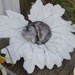 a concrete leaf tutorial with links to more helps.  Have seen these at craft shows.... love, love