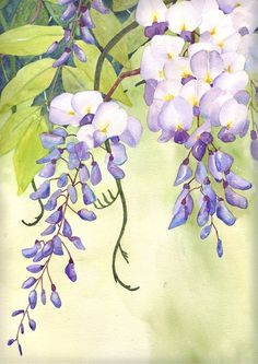 Buy 'Wisteria' by Val Spayne as a Women's Chiffon Top Contrast Tank Sticker iPhone Case iPhone Wallet Case/Skin for Samsung Galaxy Poster Throw Pillow Tote Bag Studio Pouch Mug Travel Mug Art Print Canvas Print Framed Print . China Painting, Silk Painting, Watercolour Painting, Watercolor Flowers, Watercolours, Wisteria, Botanical Prints, Art Floral, Japanese Art