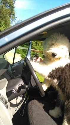 Kayleigh gaat auto rijden