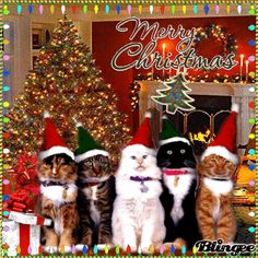 X'mas Cat II Use Blingee free online photo editor to create card! :-) X'mas Cat II Use Blingee free online photo editor to create card! Animated Christmas Tree, Christmas Hanukkah, Christmas Scenes, Christmas Animals, Christmas Cats, Christmas Wishes, All Things Christmas, Vintage Christmas, Christmas Holidays