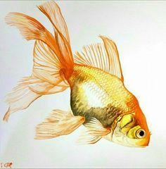 Free Hand Rangoli Design, Rangoli Designs, Color Pencil Art, Carp, Aquariums, Aquarium Fish, Goldfish, Ox, Colored Pencils