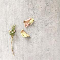 Mini still life, adore the colours #inspiredbynature #perfectioninimperfection #petals #rosepetals #tatteredrose #floralstilllife #floralelements
