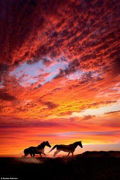 Horses Run Free