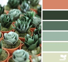 Paper Succulents via @designseeds  #seedscolor #color #colorpalette #color #palette #pallet #colour #colourpalette #design #seeds #designseeds