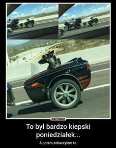 Funny Dogs, Funny Memes, Polish Memes, Cool Pictures, Funny Pictures, British Humor, Monday Humor, Office Humor, Christian Humor