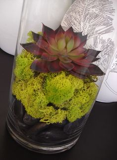 Faux Succulent and Moss Terrarium Tall Cylinder by MelindaMay Cylinder Vase Centerpieces, Edible Centerpieces, Succulent Centerpieces, Succulent Arrangements, Wedding Centerpieces, Centerpiece Ideas, Plants In Jars, Succulents In Containers, Faux Succulents