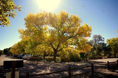 Rio Grande Nature Center State Park - ALB