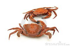 two-crabs-shaking-hands-10721678.jpg (400×267)