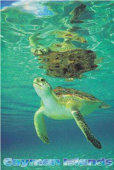 Cayman Islands 001