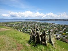 Volcano Walk in Auckland - Mangere Mountain erupted about years ago. This volcano does not have paved paths and roads. Dog Leash, Auckland, Volcano, Walks, Playground, New Zealand, The Neighbourhood, Bridge, Mountain