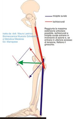 Istituto Superiore di Posturologia Neuro-Mio-Fasciale AIFIMM Weighted Squats, Posture Exercises, Body Study, Reflexology Massage, Back Squats, Muscle Anatomy, Knee Pain, Human Anatomy, Physical Therapy