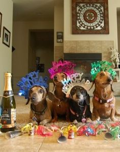 have a happy and prosperous new year happy new year dog weenie dogs