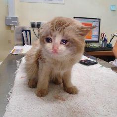 Funny Cat Faces, Funny Cats, Funny Animals, Cute Animals, Sad Cat Meme, Cat Memes, Funny Kermit Memes, Dumb Cats, Cat Crying