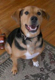 Riley was adopted from Wags & Whiskers Animal Rescue of MN.  www.WagsMN.org