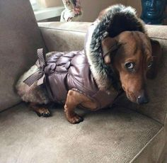 .It's too cold to pee outside.